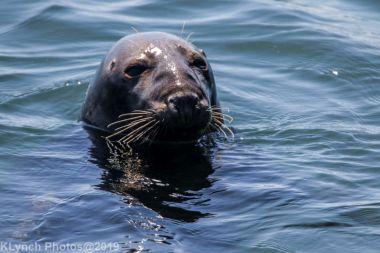 Seals_20