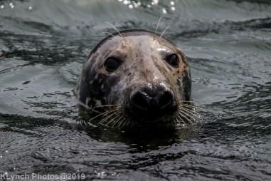 Seals_21