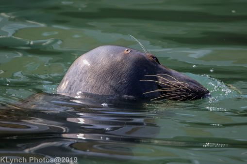 Seals_22