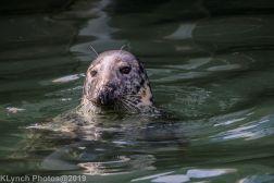 Seals_25