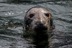 Seals_26