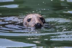 Seals_27