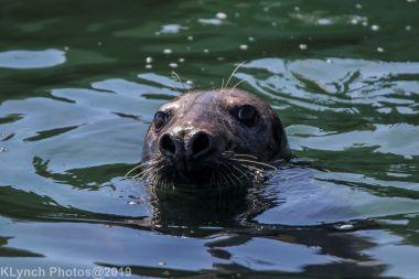Seals_32