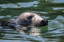 Seals_45