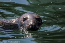 Seals_46