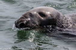 Seals_47