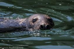 Seals_48