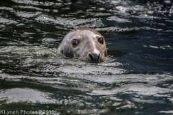 Seals_50