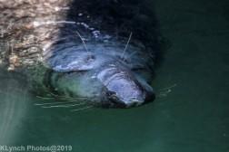 Seals_51
