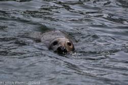 Seals_56