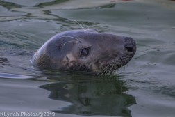 Seals_57