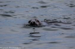 Seals_58