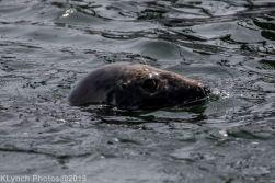 Seals_6