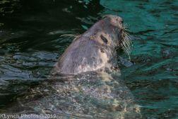 Seals_60