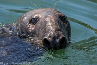 Seals_64