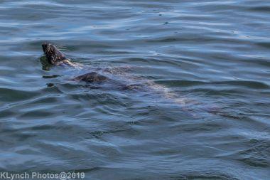 Seals_65
