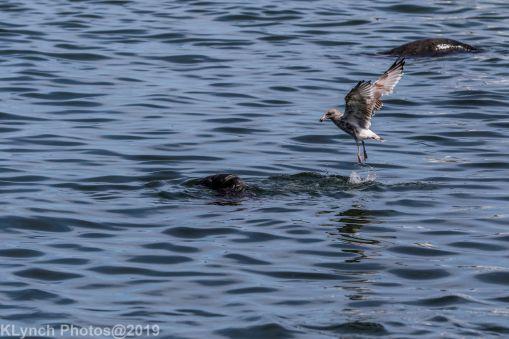 Seals_67