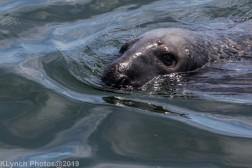 Seals_68