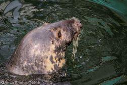 Seals_70
