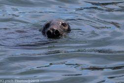 Seals_71