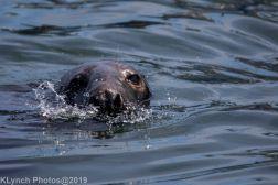 Seals_72