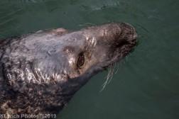 Seals_73