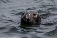 Seals_75