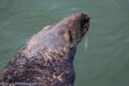 Seals_76