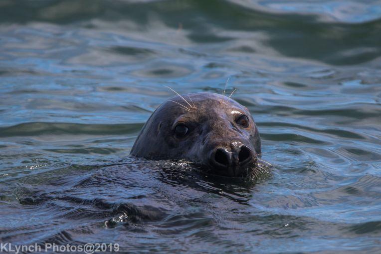 Seals_77