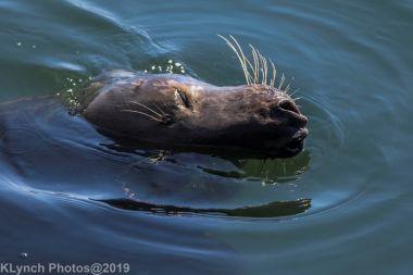 Seals_9