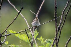 Sparrow_3