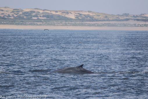 WhaleA