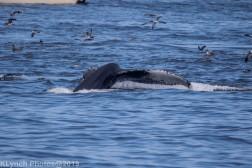 WhaleA_12