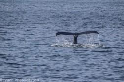 WhaleA_14