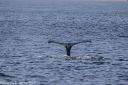 WhaleA_15