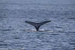 WhaleA_16