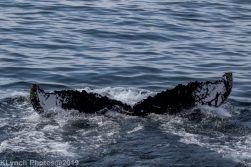 WhaleA_29