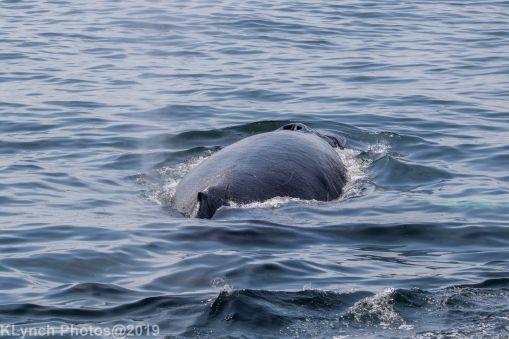 WhaleA_33
