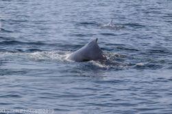 WhaleA_35