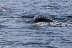 WhaleA_36