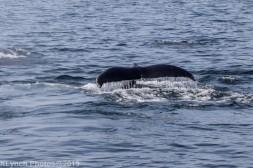 WhaleA_37
