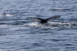 WhaleA_38