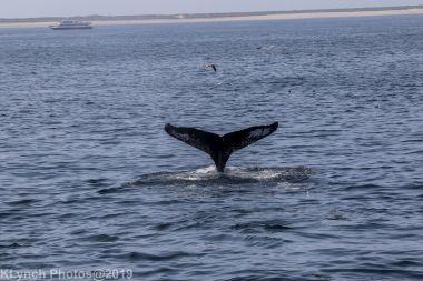 WhaleA_43