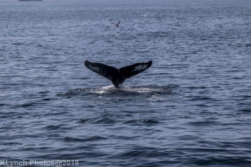 WhaleA_44