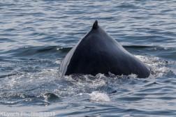 WhaleA_46