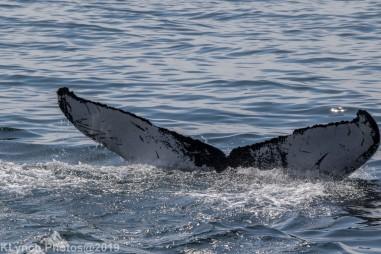 WhaleA_53