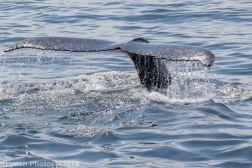 WhaleA_58