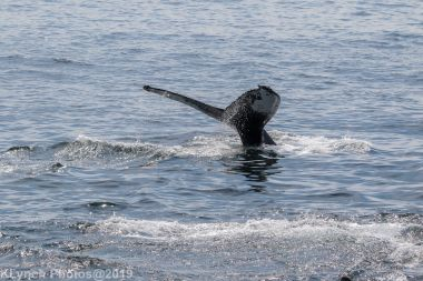 WhaleA_65