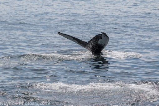 WhaleA_66