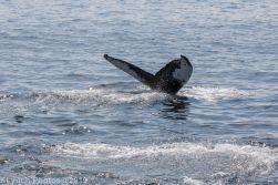 WhaleA_67